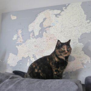Europa-karte-als-bild-grau-cremefabre
